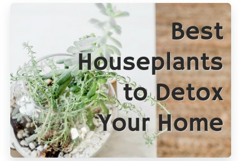 100 Freebies and Free Printables - Detox your Home