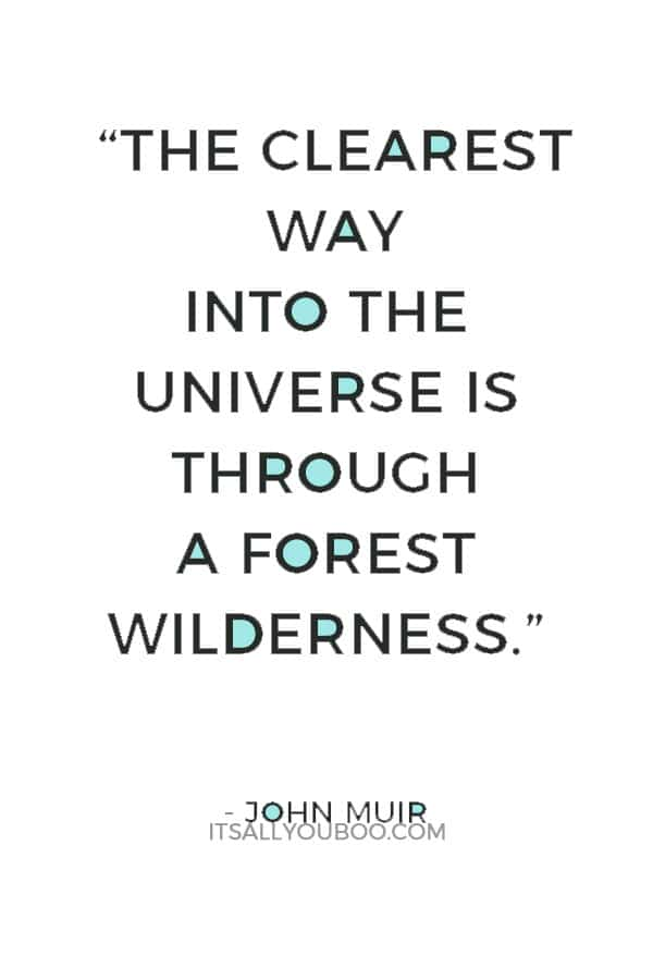 """""""The clearest way into the Universe is through a forest wilderness."""" – John Muir"""